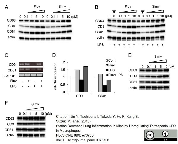 Anti Mouse CD81 Antibody, clone Eat2 thumbnail image 6