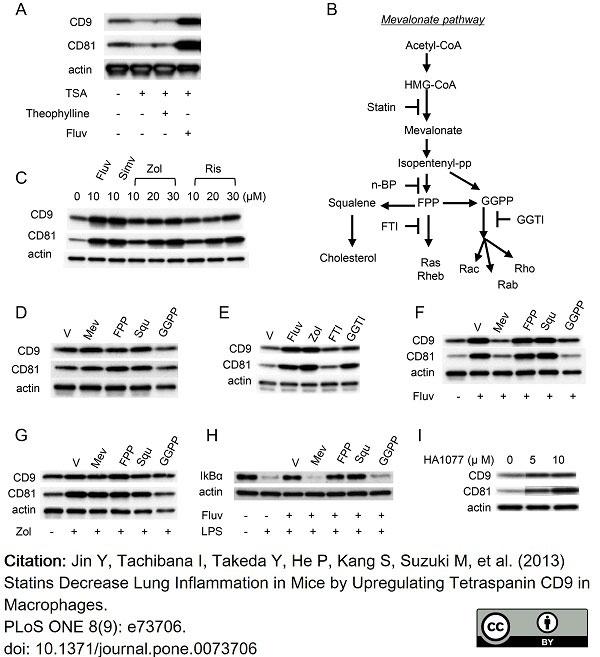 Anti Mouse CD81 Antibody, clone Eat2 thumbnail image 8