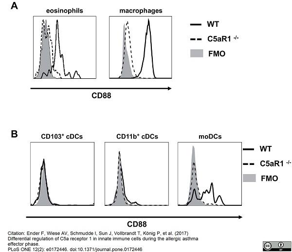 Anti Mouse CD88 Antibody, clone 20/70 thumbnail image 2