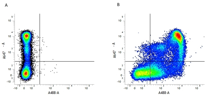 Anti Mouse CD9 Antibody, clone MF1 thumbnail image 1