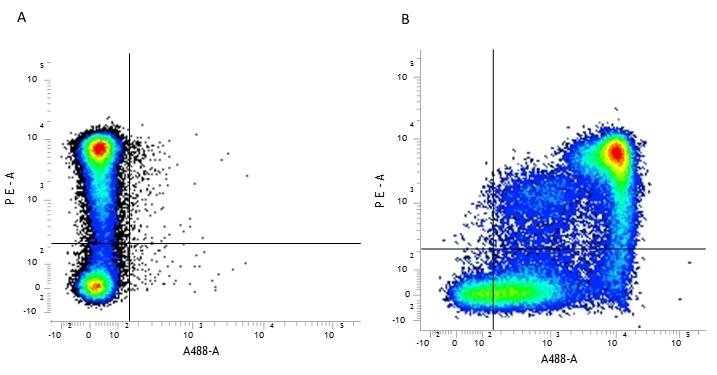Anti Mouse CD9 Antibody, clone MF1 thumbnail image 2