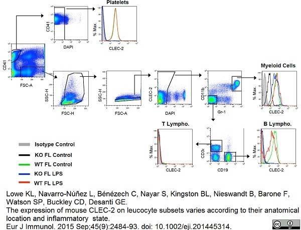 Anti Mouse CLEC2 Antibody, clone 17D9 thumbnail image 3