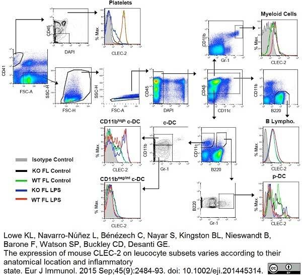 Anti Mouse CLEC2 Antibody, clone 17D9 thumbnail image 4