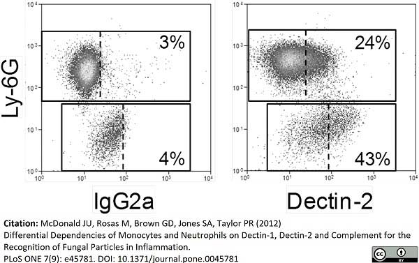 Anti Mouse Dectin-2 Antibody, clone D2.11E4 thumbnail image 1