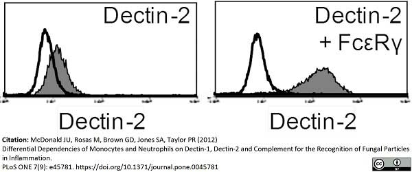 Anti Mouse Dectin-2 Antibody, clone D2.11E4 gallery image 2