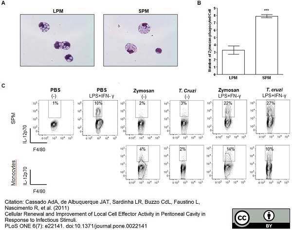 Anti Mouse F4/80 Antibody, clone Cl:A3-1 thumbnail image 10
