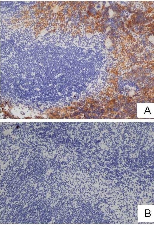 Anti Mouse F4/80 Antibody, clone Cl:A3-1 thumbnail image 38