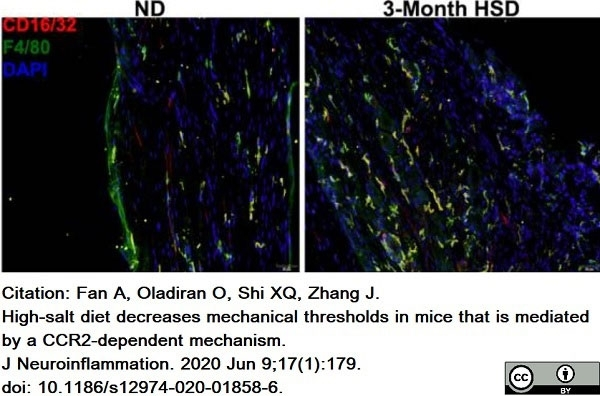 Anti Mouse F4/80 Antibody, clone Cl:A3-1 thumbnail image 58