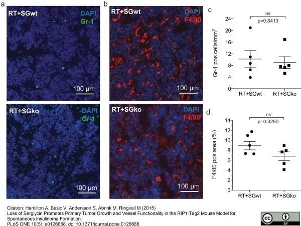Anti Mouse F4/80 Antibody, clone Cl:A3-1 thumbnail image 6