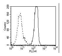 Anti High Mobility Group Protein B1 Antibody, clone HMG1-5H6 thumbnail image 3