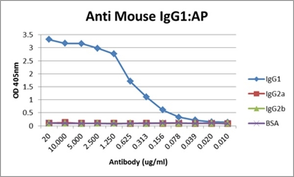 Anti Mouse IgG1 Antibody, clone AbD24121 thumbnail image 12