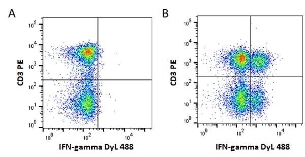 Anti Mouse IgG1 Antibody, clone AbD24121 thumbnail image 3