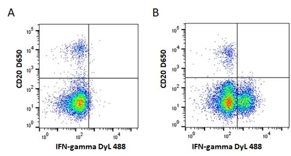 Anti Mouse IgG1 Antibody, clone AbD24121 thumbnail image 4