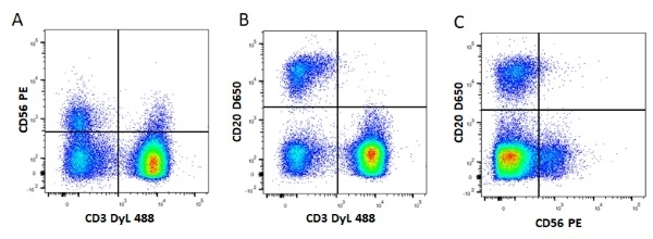 Anti Mouse IgG1 Antibody, clone AbD24121 thumbnail image 5