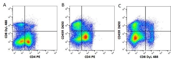 Anti Mouse IgG1 Antibody, clone AbD24121 thumbnail image 7