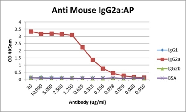 Anti Mouse IgG2a:Alk. Phos Antibody, clone AbD24124 gallery image 11