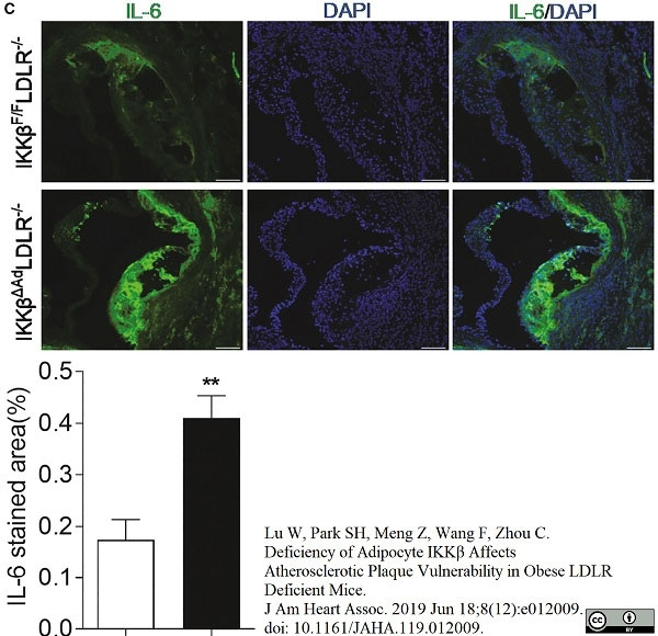 Anti Mouse Interleukin-6 Antibody, clone MP5-20F3 gallery image 1