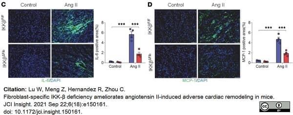 Anti Mouse Interleukin-6 Antibody, clone MP5-20F3 thumbnail image 2