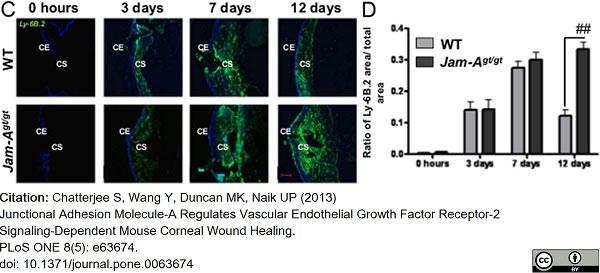 Anti Mouse Ly-6B.2 Alloantigen Antibody, clone 7/4 thumbnail image 38
