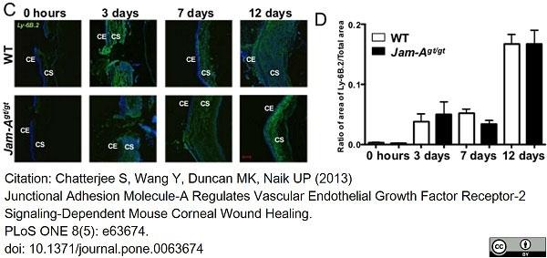 Anti Mouse Ly-6B.2 Alloantigen Antibody, clone 7/4 thumbnail image 39