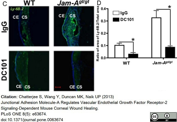 Anti Mouse Ly-6B.2 Alloantigen Antibody, clone 7/4 thumbnail image 40