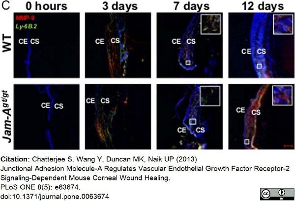 Anti Mouse Ly-6B.2 Alloantigen Antibody, clone 7/4 thumbnail image 41