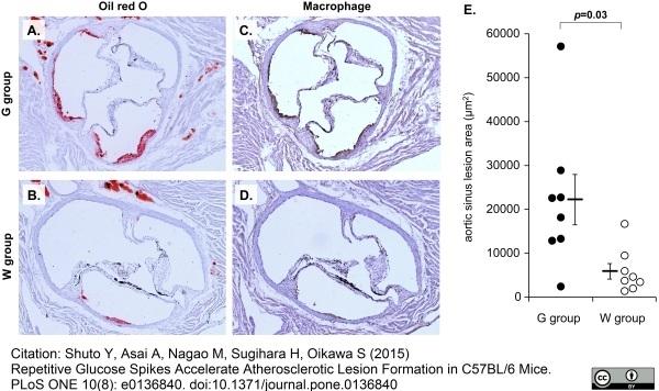 Anti Mouse Macrophages/Monocytes Antibody, clone MOMA-2 thumbnail image 13