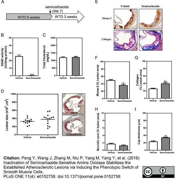 Anti Mouse Macrophages/Monocytes Antibody, clone MOMA-2 thumbnail image 14