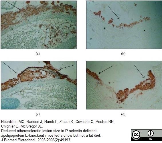 Anti Mouse Macrophages/Monocytes Antibody, clone MOMA-2 thumbnail image 3
