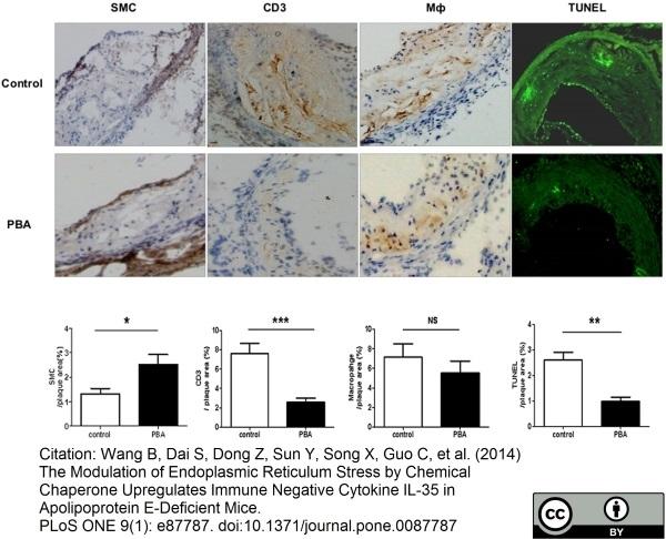 Anti Mouse Macrophages/Monocytes Antibody, clone MOMA-2 thumbnail image 6