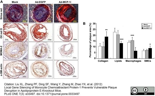 Anti Mouse Macrophages/Monocytes Antibody, clone MOMA-2 thumbnail image 7