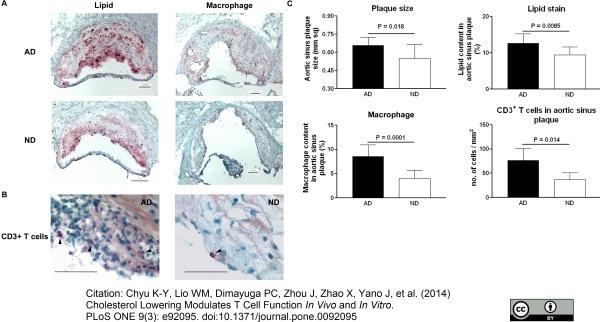 Anti Mouse Macrophages/Monocytes Antibody, clone MOMA-2 thumbnail image 8