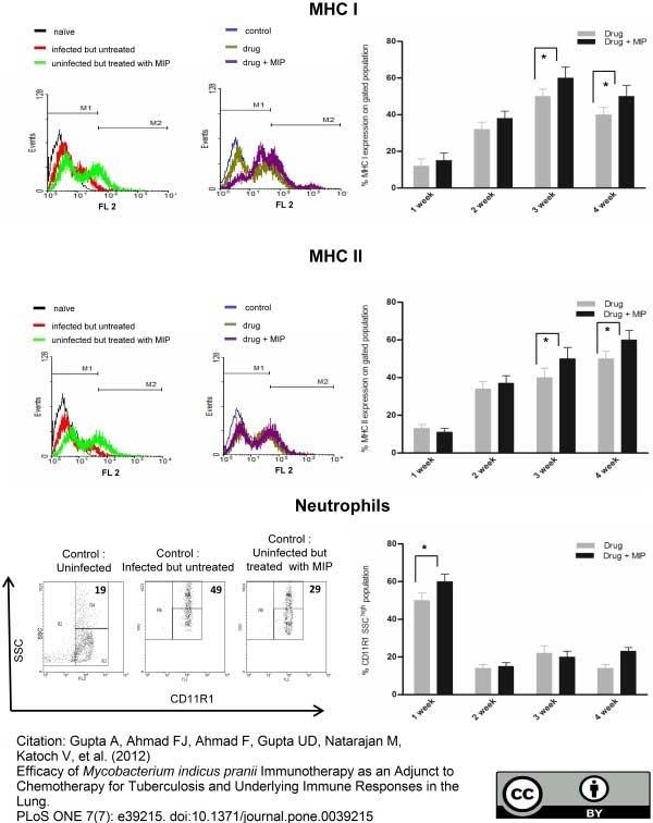 Anti Mouse MHC Class I Antibody, clone 2G5 thumbnail image 1