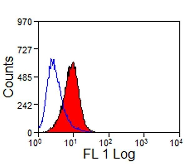 Anti Mouse TIM-1 Antibody, clone RMT1-10 thumbnail image 2