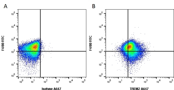 Anti Mouse Trem-2 Antibody, clone 78.18 gallery image 1