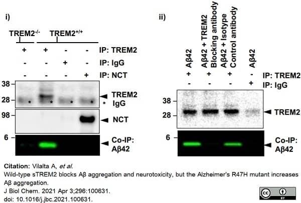 Anti Mouse Trem-2 Antibody, clone 78.18 thumbnail image 2