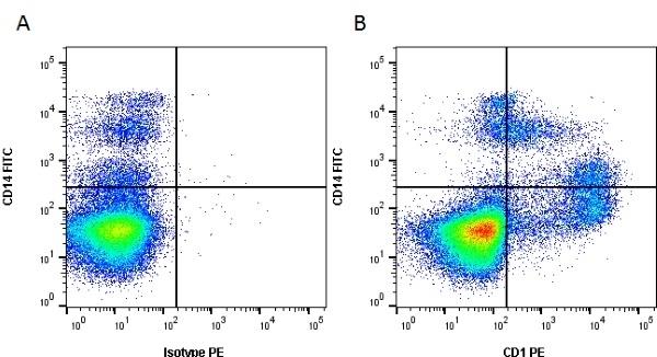 Anti Pig CD1 Antibody, clone 76-7-4 thumbnail image 1
