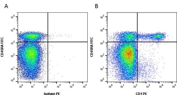 Anti Pig CD1 Antibody, clone 76-7-4 thumbnail image 2