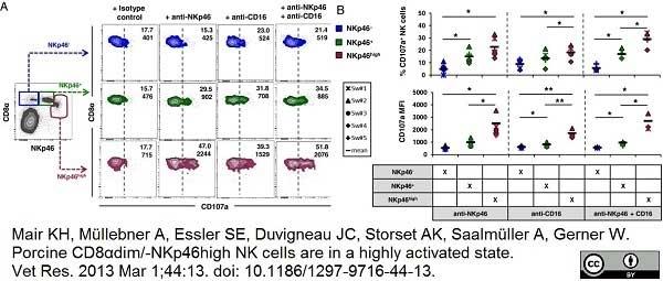 Anti Pig CD107a Antibody, clone 4E9/11 thumbnail image 3