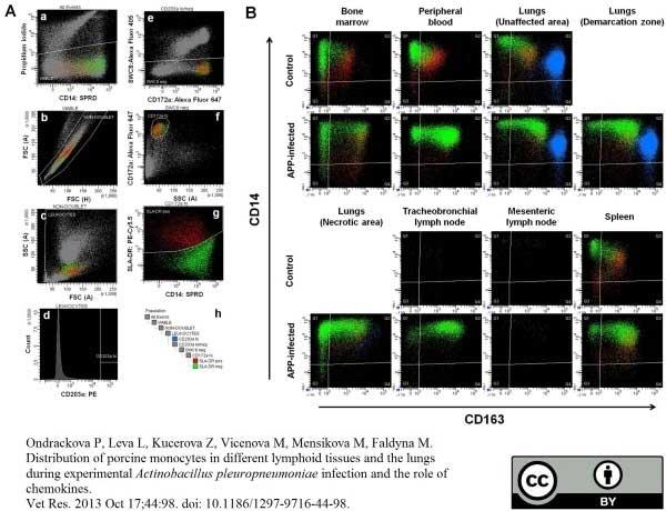 Anti Pig CD14 Antibody, clone MIL2 thumbnail image 2