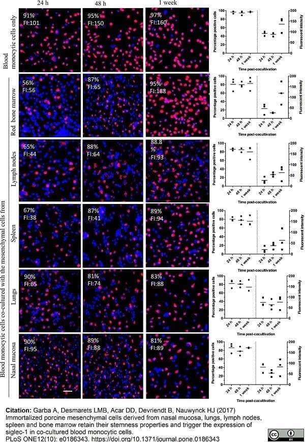 Anti Pig CD163 Antibody, clone 2A10/11 thumbnail image 14
