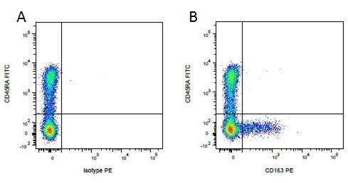 Anti Pig CD163 Antibody, clone 2A10/11 thumbnail image 2