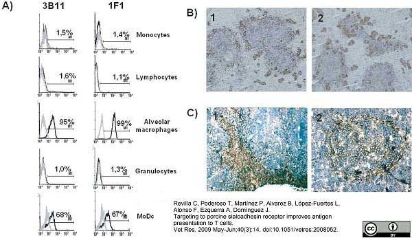 Anti Pig CD169 Antibody, clone 3B11/11 thumbnail image 1