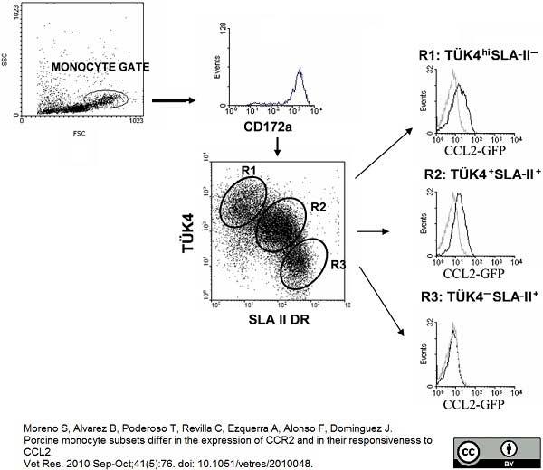 Anti Pig CD172a Antibody, clone BL1H7 thumbnail image 1