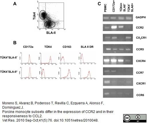 Anti Pig CD172a Antibody, clone BL1H7 thumbnail image 4