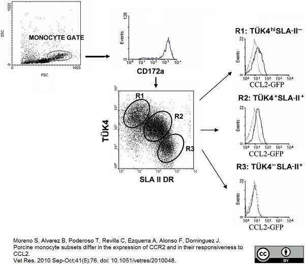 Anti Pig CD172a Antibody, clone BL1H7 thumbnail image 5