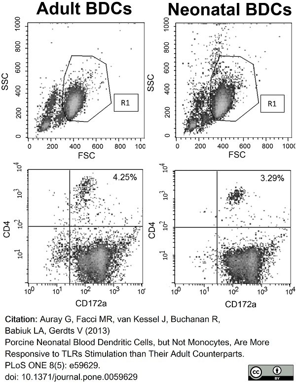 Anti Pig CD172a Antibody, clone BL1H7 thumbnail image 7
