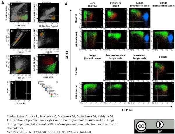 Anti Pig CD203a Antibody, clone PM18-7 thumbnail image 2