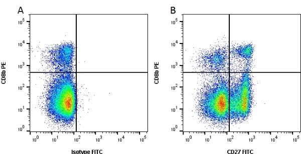 Anti Pig CD27 Antibody, clone B30C7 thumbnail image 2
