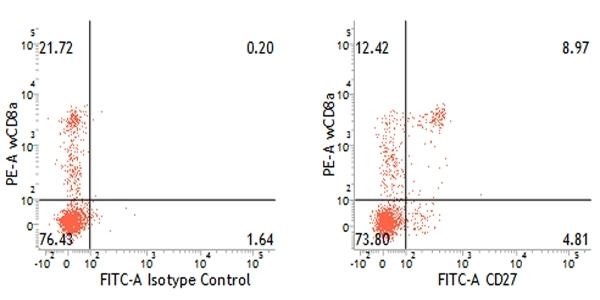 Anti Pig CD27 Antibody, clone B30C7 thumbnail image 3